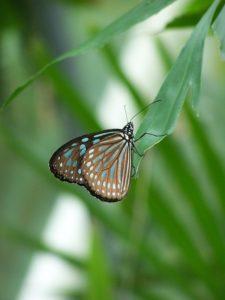 butterfly-1397314